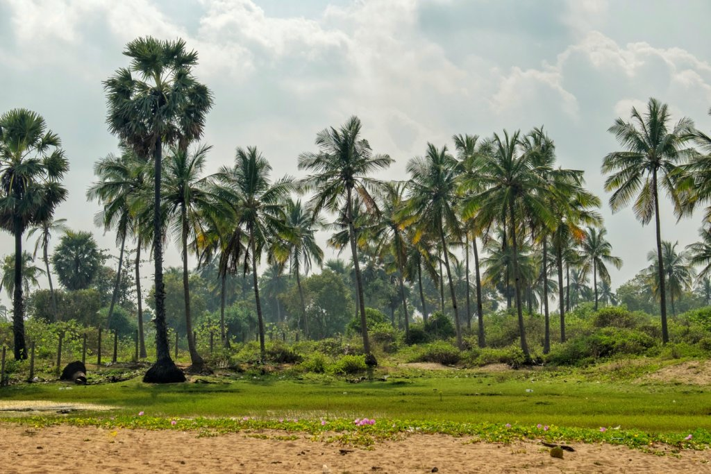 The evergreen island