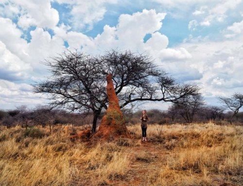 What to do in Otjiwarongo, Namibia