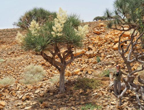 Ethiopian adventures: from Addis Abeba to Dessie