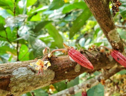 Colombia: Minca