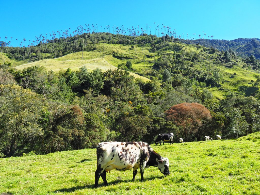 Hiking in Cocora Valley