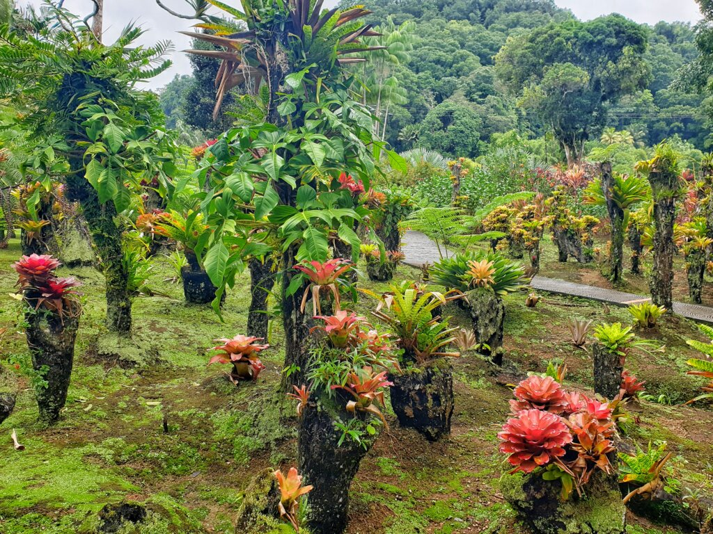 Jardin Bolata