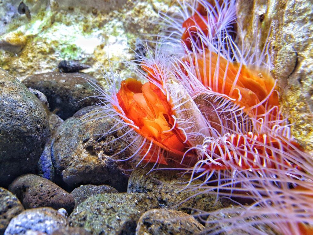 Aquarium of Guadeloupe