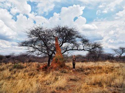 Termites Mound