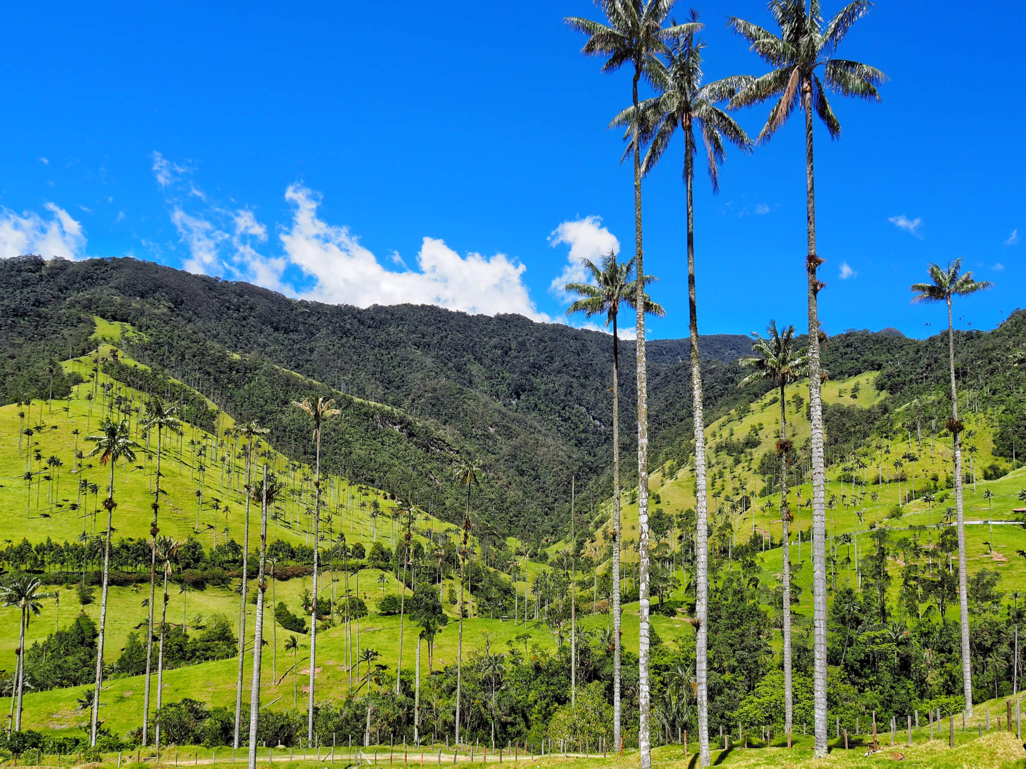 Colombia: Salento and Cocora Valley