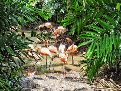 The Zoo of Martinique